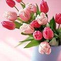 4月10日の誕生花は「チューリップ」